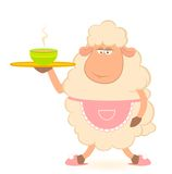 Sheep -  brings a  food Stock Photos