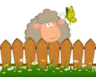 Sheep with butterfly Stock Image