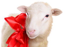Sheep with Christmas bow Royalty Free Stock Image