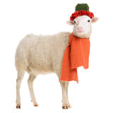 Sheep in Christmas clothes Royalty Free Stock Photo
