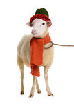 Sheep in Christmas clothes Royalty Free Stock Photos