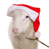 Sheep in Christmas hat Royalty Free Stock Image
