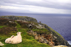 Sheep on cliff Royalty Free Stock Photography