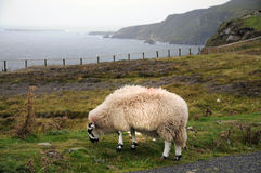 Sheep on cliff Royalty Free Stock Photos