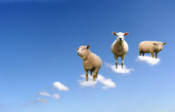 Sheep on clouds. A herd of sheep on clouds Royalty Free Stock Images