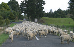 Sheep Country Royalty Free Stock Images