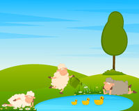 Sheep on country landscape with tree and lake. Royalty Free Stock Photo