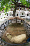 Sheep on the courtyard of the monastery Bachkovski Stock Photo