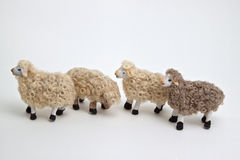 The sheep of the crib Stock Photos