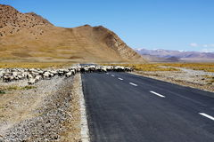 Sheep crossing the road Royalty Free Stock Photos