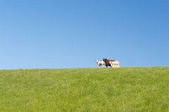 Sheep on Stock Photo