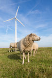 Sheep at a dike along a row of wind turbines Royalty Free Stock Image