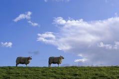 Sheep on a dike Royalty Free Stock Photo