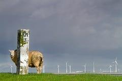 Sheep, dike, milestone and windmills Stock Photography