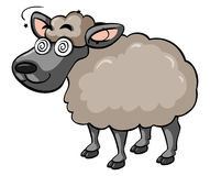 Sheep with dizzy face Stock Image