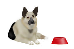 Sheep-dog. The sentry dog lies near to a red bowl Stock Images