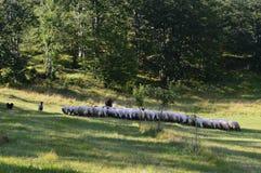 Sheep, dog, mountines, animal, nature royalty free stock photos