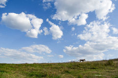 Sheep dog on the hill Royalty Free Stock Photography