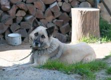 Sheep dog Stock Images