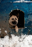 Sheep dog Royalty Free Stock Photos