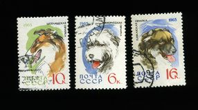 Sheep-dogs on USSR post stamps Royalty Free Stock Images