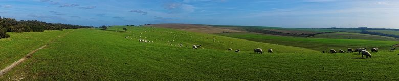 Sheep on the Downs Stock Images