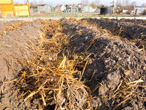 Sheep dung on vegetable garden soil  Stock Images