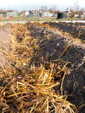 Sheep dung on vegetable garden soil Royalty Free Stock Photography