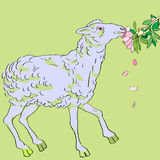 Sheep eating flowers Stock Image