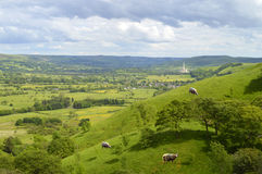 Sheep in Edale Derbyshire. England, UK Stock Image