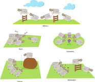 Sheep and Education. Funny Illustration of sheep attending different classes at school. Eps10 Stock Image