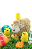 Sheep with eggs and chicks in a meadow. Passover with chicks and Easter eggs on a flower meadow royalty free stock photography