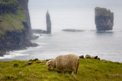 Sheep and famous rock formation: Risin and Kellingin. Typical faroese picture. Sheep and famous rock formation: Risin and Kellingin. Faeroe Islands, North Stock Photography