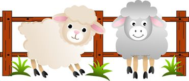 The sheep on the farm Royalty Free Stock Images