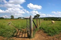 Sheep Farm Stock Photos
