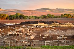 Sheep farm and hills of Seville Spain stock photos