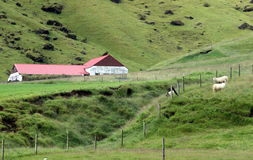 Sheep Farm in Iceland. Iceland`s green interior is dotted with sheep farms Stock Photo