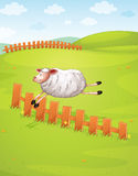 A sheep in a farm. Illustration of a sheep jumping in green farm Stock Photography
