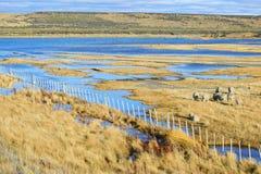 Sheep farm and the lake colors Royalty Free Stock Image