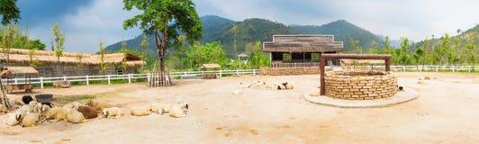 Sheep farm land Stock Images
