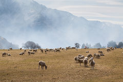 Sheep farm and Mountains in the morning. Moke Lake, Queenstown, New Zealand Royalty Free Stock Photography