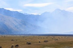 Sheep farm and Mountains in the morning. Moke Lake, Queenstown, New Zealand Royalty Free Stock Images