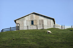 Sheep farm in New Zealand Stock Photos