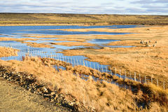 Sheep farm in Patagonia and the lakes Stock Images