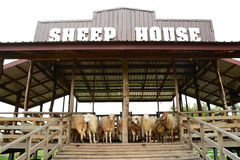 Sheep farm. Sign Stock Image