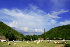 Sheep farms In the mountains Stock Images