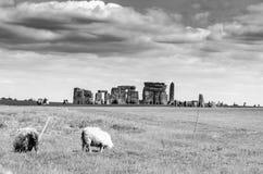Sheep feeding as visitors tour Stonehenge in black and white royalty free stock photos