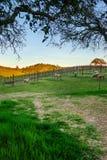 Sheep feeding in vineyard Stock Photography