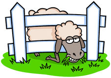 Sheep and Fence Stock Photos