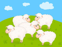 Sheep on the field Royalty Free Stock Photography
